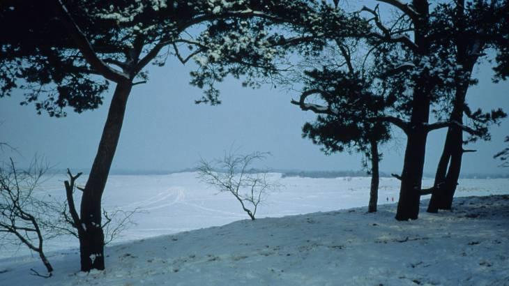 Gratis excursie Stevig Stappen Loonse en Drunense Duinen 28-12-2012