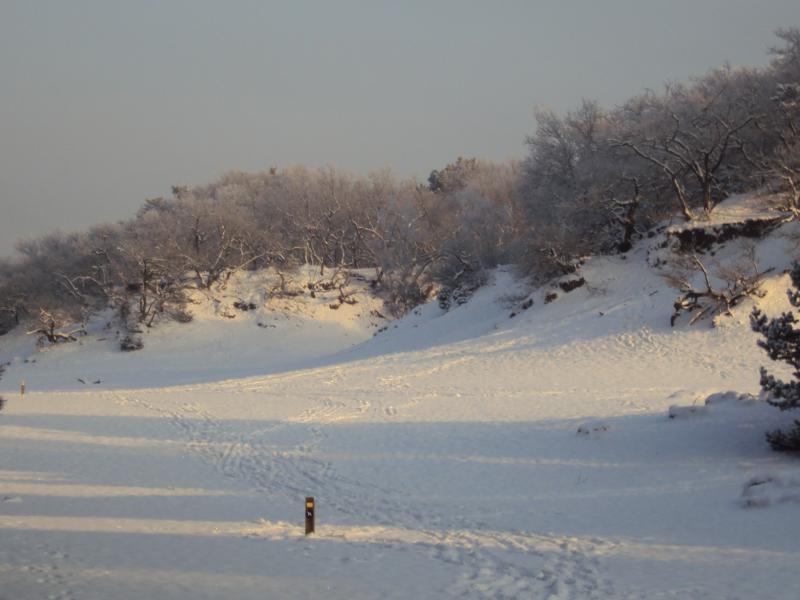 Loonse & Drunense Duinen – Sneeuw