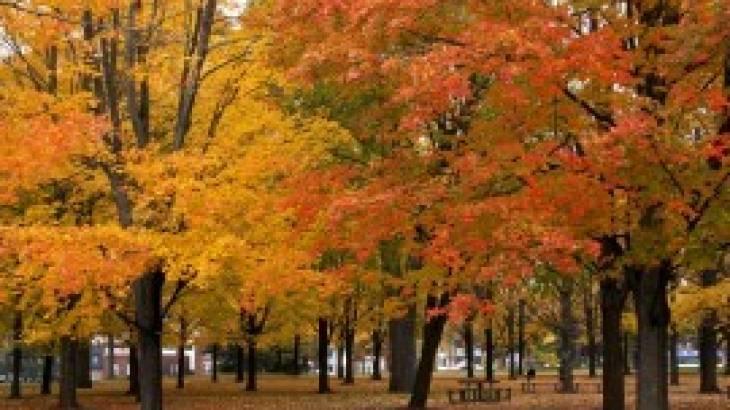 Gratis herfstwandeling op 21 Oktober